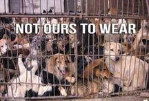 No Fur !