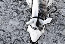 Horse riding. / Horses