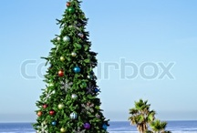 Coastal Christmas Trees / by Michelle MacCarthy
