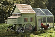 COUNTRY Chickens 'n Coops / by Ronnie Turner
