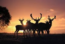 ANIMALS...Racks 'n Horns / by Ronnie Turner