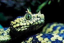 REPTILES...Snake Love <3 / by Ronnie Turner