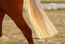 ANIMALS...Horse Hair / by Ronnie Turner