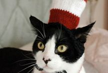 ANIMALS...Cat in a Hat / by Ronnie Turner