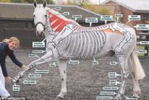 ANIMALS...Horse Costumes / by Ronnie Turner