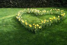Tuin: algemeen (garden)