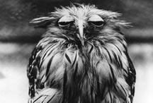 The Owlening