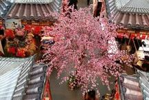 Cherry Blossom / Spring has sprung! Find stunning photos here of cherry blossoms from around the world.
