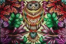 Jardim Secreto - Coruja / Secret Garden - Owl