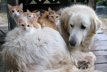 FRIENDS..DOGS & CATS