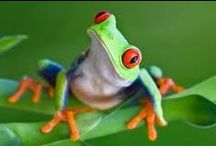 Jungle / Mostly frogs. / by Ingrid Terpening