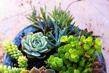 Xeriscape/ Landscape/ Garden Ideas / by Elizabeth Harrison