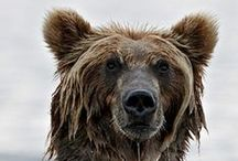 Bears.....black,brown, polar, panda, or Teddy.... We love them all!!! / by BEARPAW