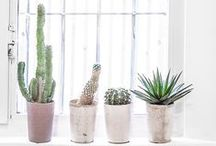 04. objetos: plantas / by Carmen Milowcostblog