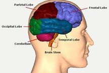 Traumatic Brain Injuries / Resources and publications to help CSD professionals treat populations who have traumatic brain injuries. Pins, repins and likes do not imply endorsement. / by American Speech-Language-Hearing Association (ASHA)