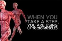 Health & Fitness info / Nutritional and Training Information.