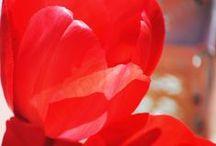 sale el sol / decoración a plena luz del día http://inventandobaldosasamarillas.blogspot.com.es/2014/04/exteriores-con-encanto.html