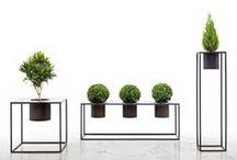 ●화분/식물 영감