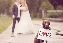 animals / by wedding decor