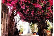 Saronic islands Greece