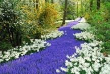ashikaga flower park japan tochigi province