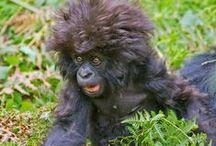 Really bad hair day