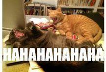 I love LOL cats