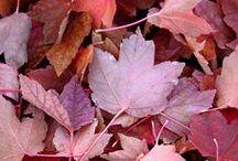 color scheme | autumn romance