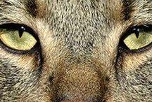 Photography / Zvířata - příroda - a jiné