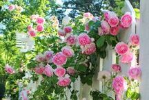 Roses - All kinds!