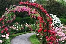 Gardening at Home and Rose Gardens