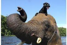 Aminals / #animal #animals #cat #dog #zoo #love #sweet #fuzzyfriends #fuzzy / by Lee Ann Hicks
