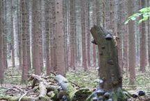 wandelen / bos rond ermelo