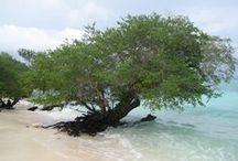 Nusa Ina (Seram, Maluku) / Nusa Ina, het eiland op de Molukken waar wij de Sumah's  vandaan komen. Trots !