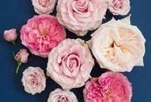 Popular Pink Rose Varieties / Board highlighting some of our and our client's favorite pink rose, garden rose and spray rose varieties.