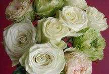 """Popular Green Rose Varieties / Some of our and our client's favorite green rose varieties. These unique rose varieties are perfect for the Pantone 2017 color of the year """"Greenery"""". Featured green rose varieties: Lemonade, Green Tea, Jade, Mayra's Green and Super Green."""