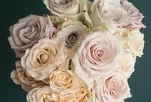 Popular Champagne Rose Varieties