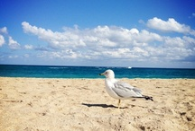 LIVE: The Palm Beaches / Actual Photographs of The Palms Beaches