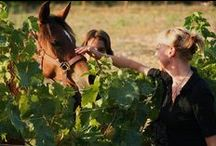 Holidays Wine in Tenuta Torciano Winery / http://www.torciano.com/USA/winery/rooms-and-apartments/