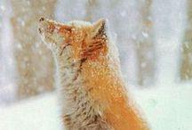 =:> Fox & Snow
