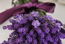 Flowers ❊