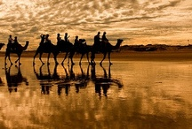 Arabia / There is something mystical and beautiful about the endless deserts of Arabia. Sometimes beauty lies in the most unexpected places. Life is magical that way.