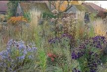Inspiring Gardens and Ideas