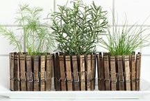 DIY Pots With Clothespins