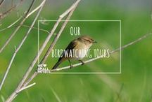 Our Birdwatching Tours