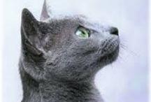 CATS / kočky