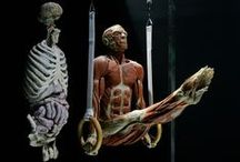 Homo sapiens - Anatomi