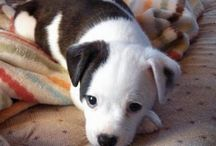 Cute Puppies / Dogs  / by Linda Plummer