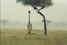 Animals / by Mina