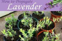 Propagating Plants / by Nan